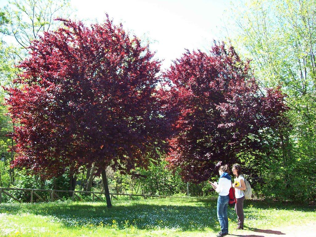 un albero per parco uditore